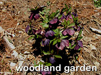 click for images of the woodland plantings